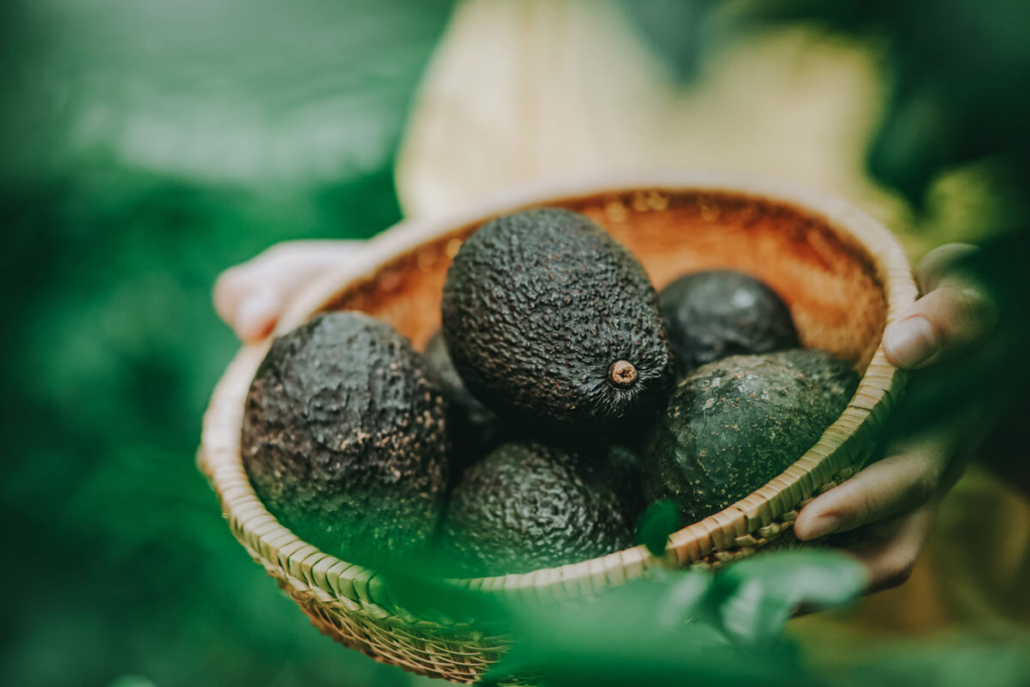 Image Avocado - Workplace Stress Article